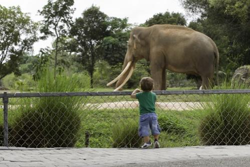 állatkert