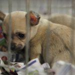 kutya állat- és növényvásár
